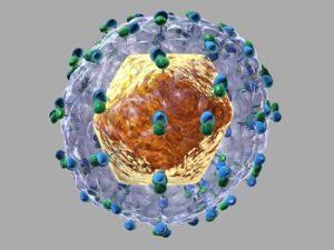 вирус гепатит C