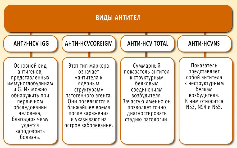 виды антител