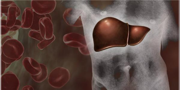 печень и лейкоциты