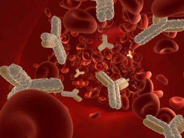 что означает появление иммуноглобулинов при гепатите С
