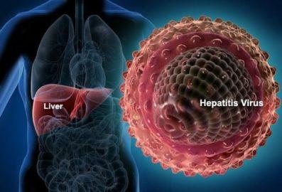 референсные значения в анализе крови на гепатит С
