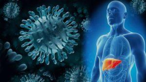 печень и вирусы гепатита