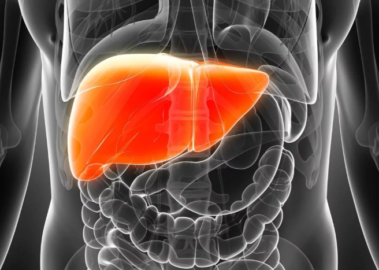 восстановление печени после гепатита С