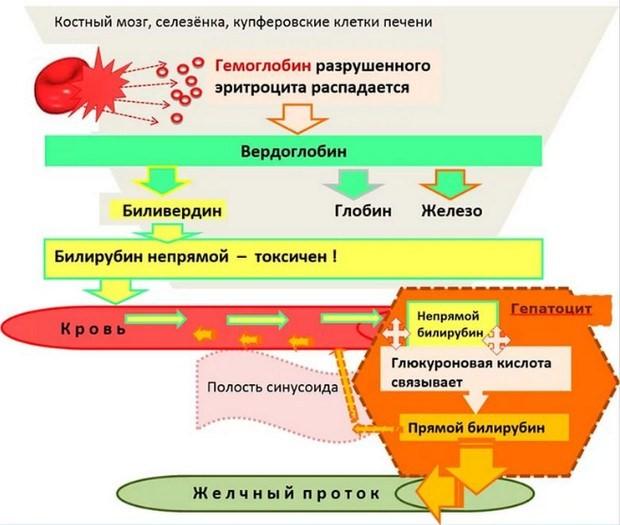 медицинская схема