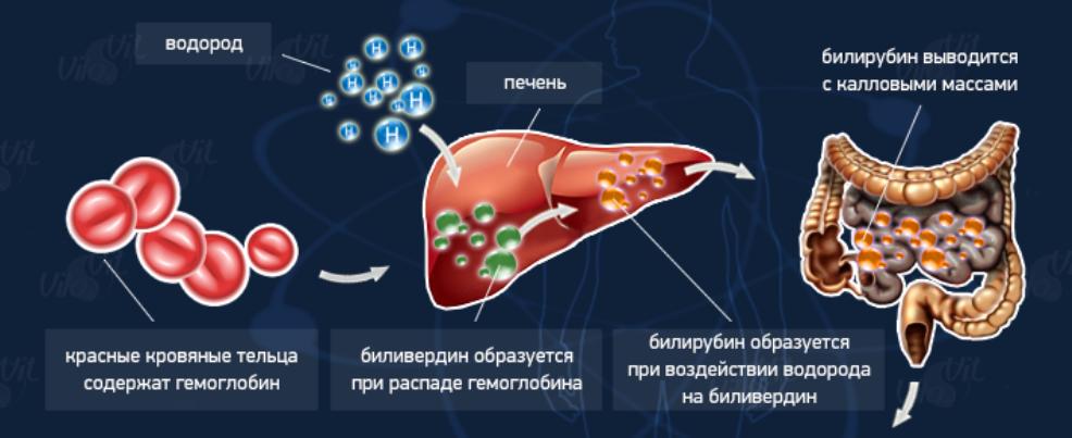 содержание и выведение билирубина