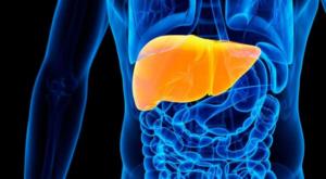 Каким бывает вирусный гепатит С по степени активности, Обзор и факты